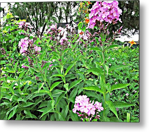 Phlox Metal Print featuring the painting Beautiful Moments by Robert Nacke