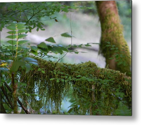Pond Metal Print featuring the photograph Beauty Of The Pacific Northwest by Candace Boggs