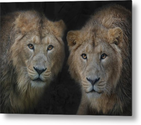 Brothers Metal Print featuring the photograph Big Brothers by Joachim G Pinkawa