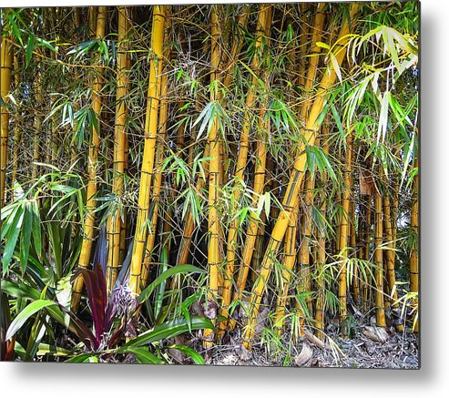 Bamboo Metal Print featuring the photograph Big Island Bamboo by Daniel Hagerman