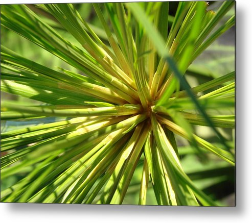 Green Lines Garden Metal Print featuring the photograph Blast by Pat Lopez