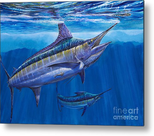 Blue Marlin Metal Print featuring the painting Blue Marlin Bite Off001 by Carey Chen