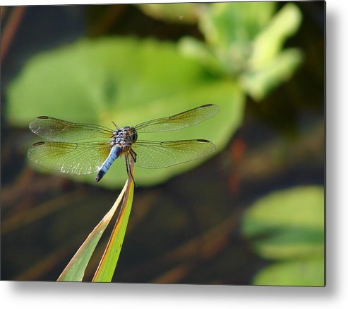 Dragonfly Metal Print featuring the photograph Break Time by Pat Lopez
