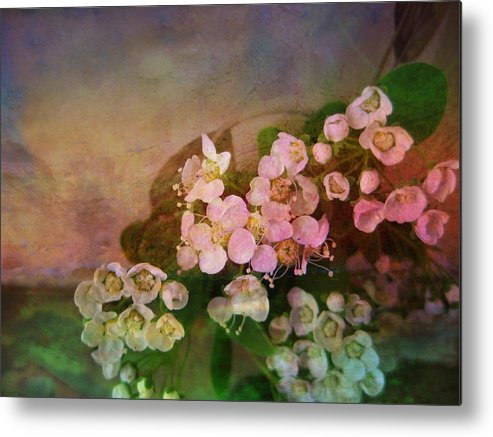 Spirea Metal Print featuring the photograph Bridal Memories by Shirley Sirois