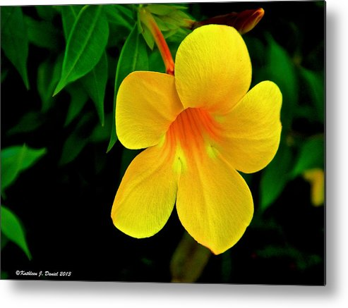 Bright Metal Print featuring the photograph Bright Yellow Flower by Kathleen J Daniel