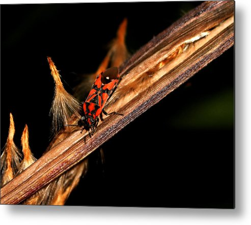 Bug Metal Print featuring the photograph Bug In The Night by Ricardo Oliveira