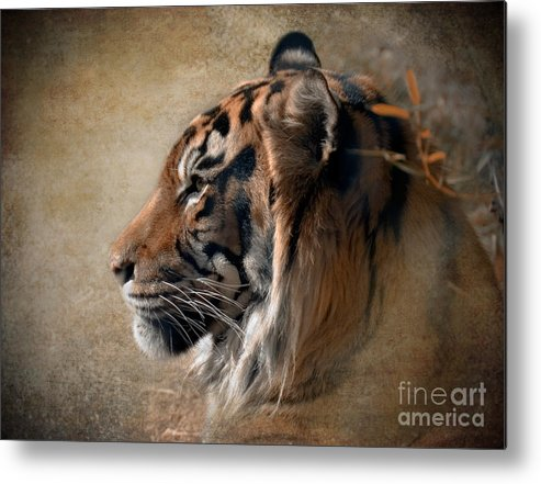 Tiger Metal Print featuring the photograph Burning Bright by Betty LaRue