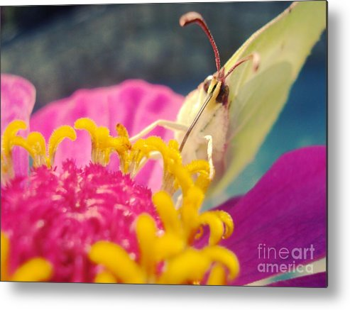 Butterfly Metal Print featuring the photograph Butterfly On Zinnia by Linda De La Rosa