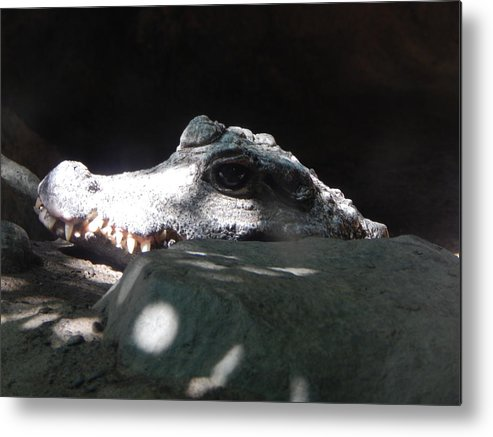 Crocodile Metal Print featuring the photograph Camo-croc by Laura Elder