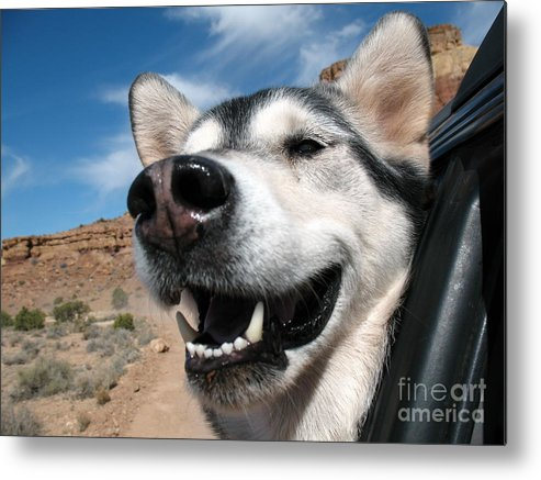 Desert Metal Print featuring the photograph Car Ride by Kimberly Cohne