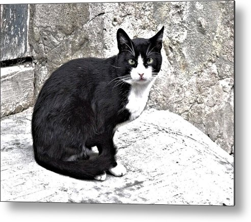 Cat From Dracula's City Metal Print