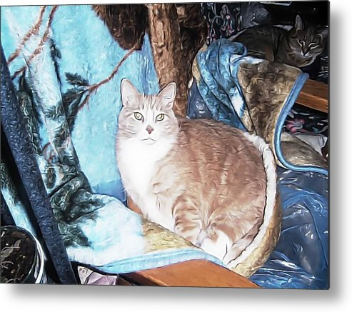 Metal Print featuring the photograph Cat Motif by Kilmeny Boates