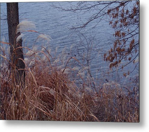 Autumn Metal Print featuring the photograph Chill by Wild Thing
