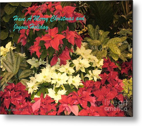 Flower Photograph Metal Print featuring the photograph Christmas Poinsettias by Lingfai Leung