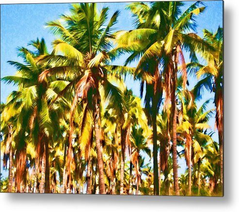 Coconut Trees Metal Print featuring the photograph Coconut Trees by Joe Carini