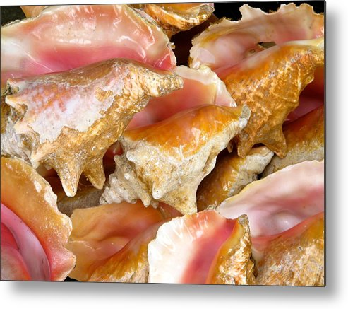 Conch Metal Print featuring the photograph Coral Conch by Pam Festa