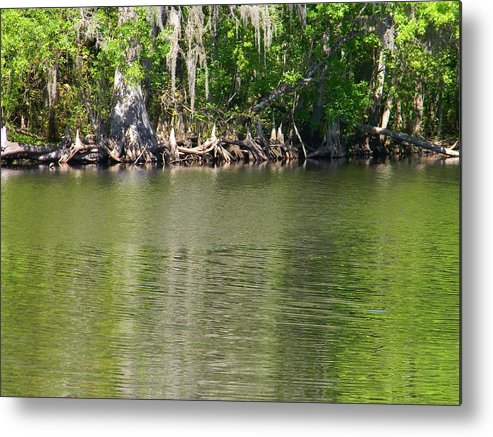 Cypress Knees Metal Print featuring the photograph Cypress Knees by Warren Thompson