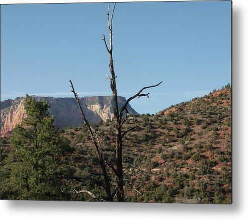 Metal Print featuring the photograph Deadwood by Jason Avery