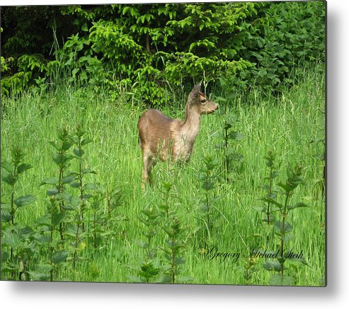 Deer In Field Metal Print featuring the photograph Deer In Field by Safe Haven Photography Northwest