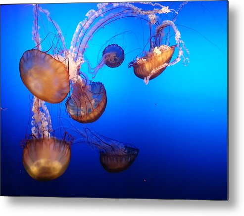 Jellyfish Metal Print featuring the photograph Delicate Waltz by Caryl J Bohn