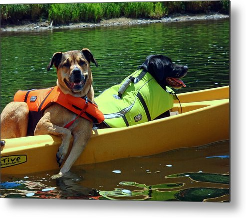 Dogs In A Kayak Metal Print featuring the photograph Dogs In A Kayak by Susan Jensen