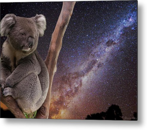 Australia Metal Print featuring the photograph Down Under by Charles Warren