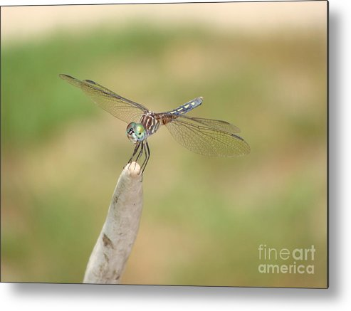 Dragonfly Metal Print featuring the photograph Dragonfly by Anita Freeman