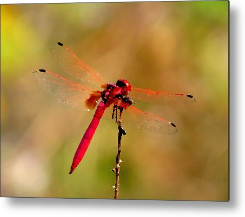 Dragonfly Metal Print featuring the painting Dragonfly Paintings by Nicole Gardner