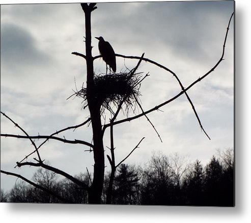 Heron Photographs Metal Print featuring the photograph Dusk by Cheryl King