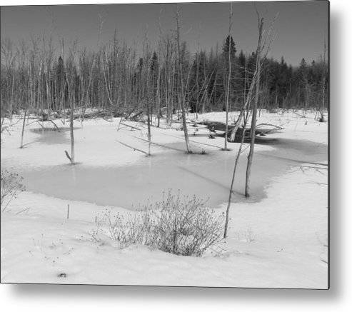 Black & White Metal Print featuring the photograph Early Spring Northern Maine 4 by Gene Cyr