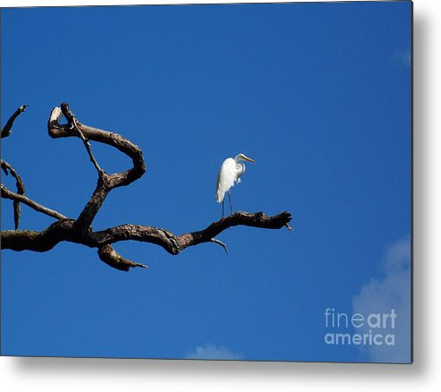 Coast Metal Print featuring the photograph Egret On Watch by Mary and Curt Johnston