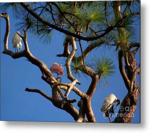 Coast Metal Print featuring the photograph Egret Spoonbill And Stork by Mary and Curt Johnston