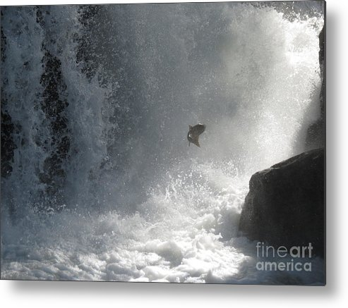 Wildlife Metal Print featuring the photograph Epic Journey by Gayle Swigart