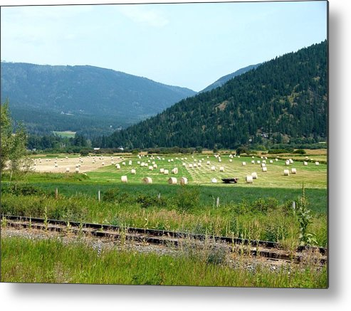 Falkland Hay Bales Metal Print featuring the photograph Falkland Hay Bales by Will Borden