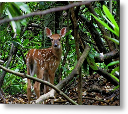 Animal Metal Print featuring the photograph Fawn In The Woods by Nick Sikorski