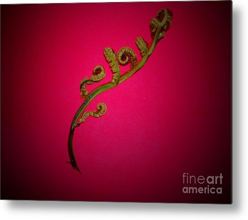 Fern Metal Print featuring the photograph Fern Frond On Red by Bill Wagner