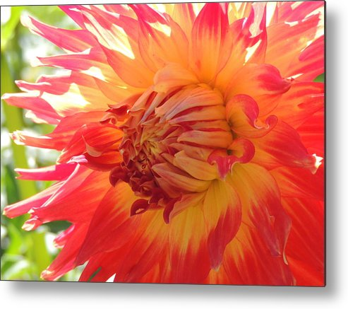 Nature Metal Print featuring the photograph Field Of Dreams by Lucy Howard