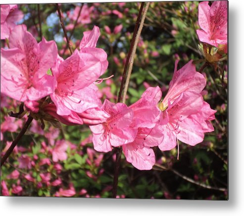 Flowers Metal Print featuring the photograph Flowers by Ashley Campbell