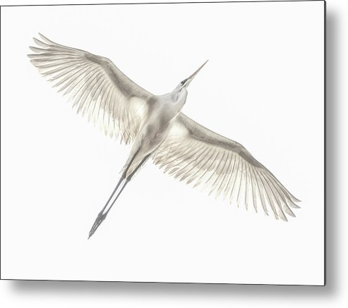 Avian Metal Print featuring the photograph Fly by Keren Or