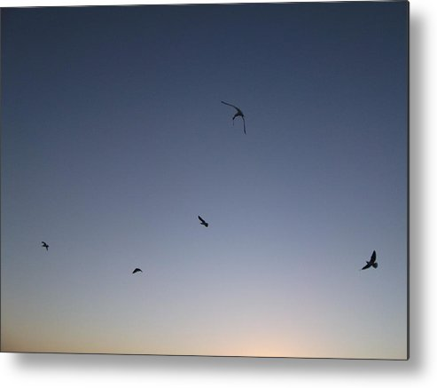 Sky Metal Print featuring the photograph Flying Free by Abigail Van Meyeren