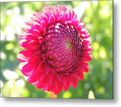 Nature Metal Print featuring the photograph Free by Lucy Howard