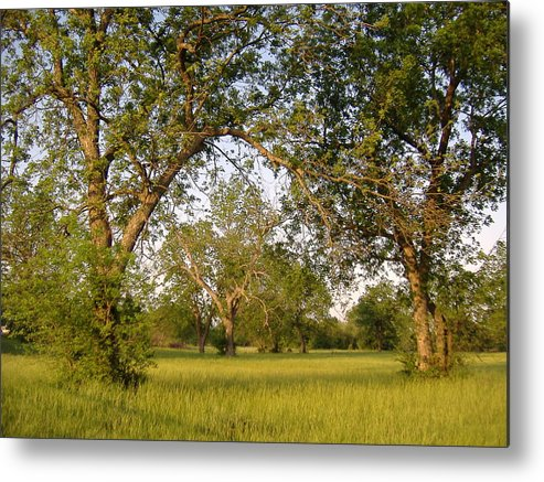 Nature Metal Print featuring the photograph Good Morning by Virginia Kay White
