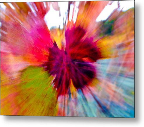 Grapevine Metal Print featuring the photograph Grape Vine Burst by Bill Gallagher