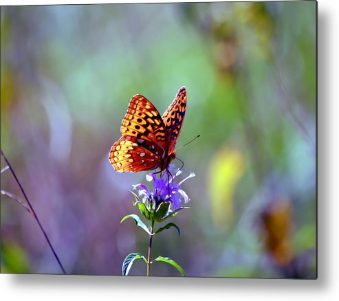 Butterfly Metal Print featuring the photograph Great Spangled Fritillary by Deena Stoddard