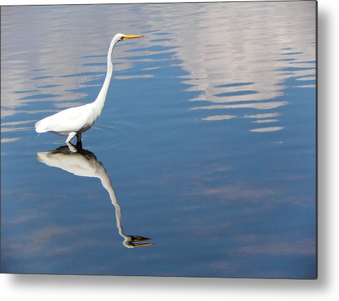 Bird Metal Print featuring the photograph Great White Reflected by Rosalie Scanlon