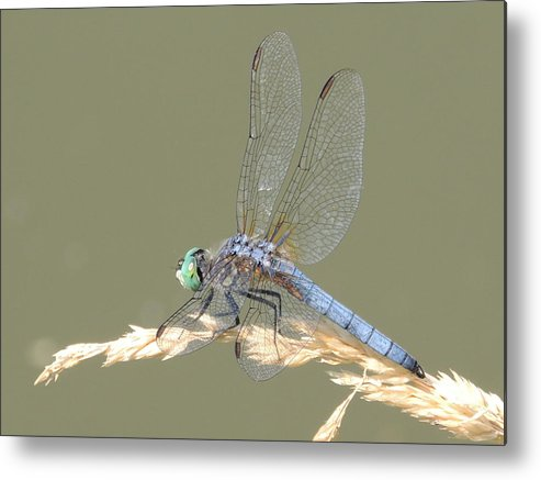 Dragonfly Metal Print featuring the photograph Green Dragonfly by Lucy Howard
