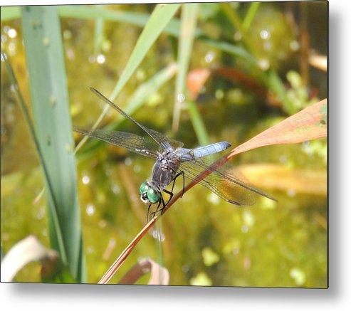 Dragonfly Metal Print featuring the photograph Green Eyes by Lucy Howard