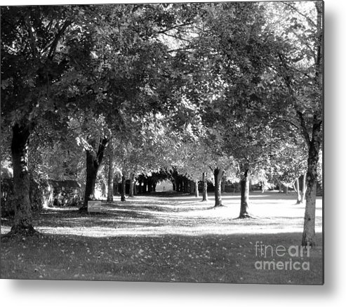 Metal Print featuring the photograph Guarded Pathway by Sharron Cuthbertson