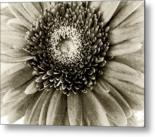 Flower Metal Print featuring the photograph Hello by Tanya Jacobson-Smith