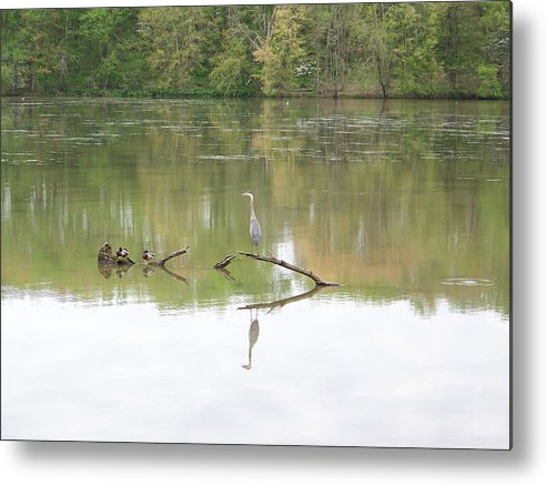 Heron Metal Print featuring the photograph Heron Reflection by Jeff Roney